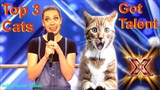 Savitsky Cats Got Talent Auditions! Amazing Cat Talent! Best Top 3 Funny Cute Animals! AGT 2018