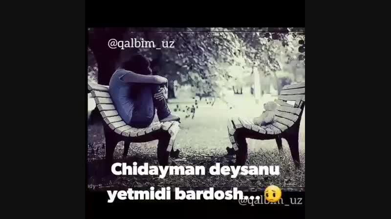 --DAGI GAPLAR-- on Instagram_ __qalbim_uz__BpIAKfi_0(MP4)_1.mp4
