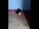 21.04.18 - Котята ищут дом. Мальчишки. 067 989 36 29 Люба (1)