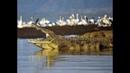 Nat Geo Wild Атака нильского крокодила 1080р