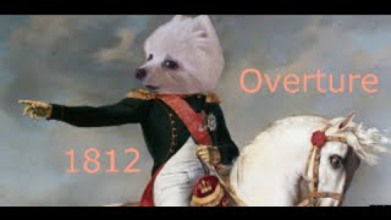 Gabe the dog 1812 Overture Tchaikovsky