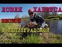 Хариус весной в Ленинградской области