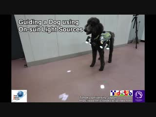 Canine motion control by using sopt light sources