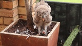 Doves and pidgeons are killing the urban owls