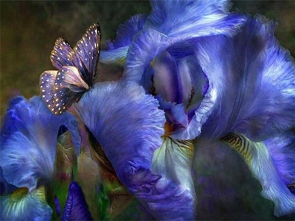 самые красивые цветы в мире фото букеты