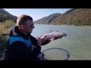 Усач река Дунай Browning Cup 2018