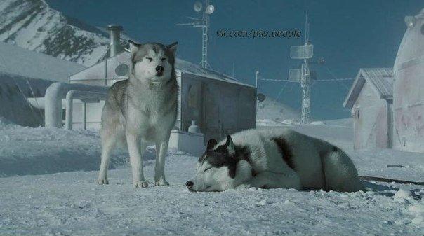 """Собаки, в отличие от людей, не знают выражений """"спасай только свою задницу"""". © Белый плен"""