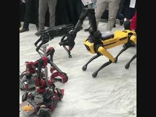 HEBI Robotics ROSie and BostonDynamics' SpotMini horsing around