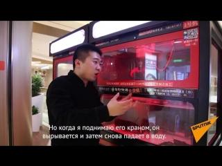 Живой омар вместо мягкой игрушки: развлечение в китайском ресторане