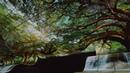 Инсталляция из гибких 4K панелей и 8K OLED телевизор от LG
