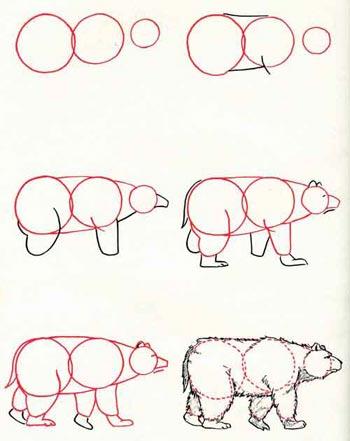 Поэтапное рисование медведя белого