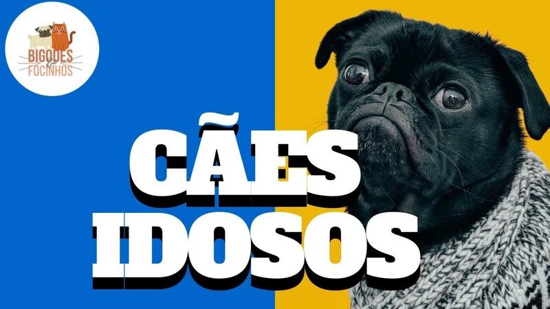 Cães Idosos - Sinais e Cuidados Dessa Fase