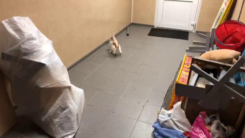 Котенок с ул. Мусорского