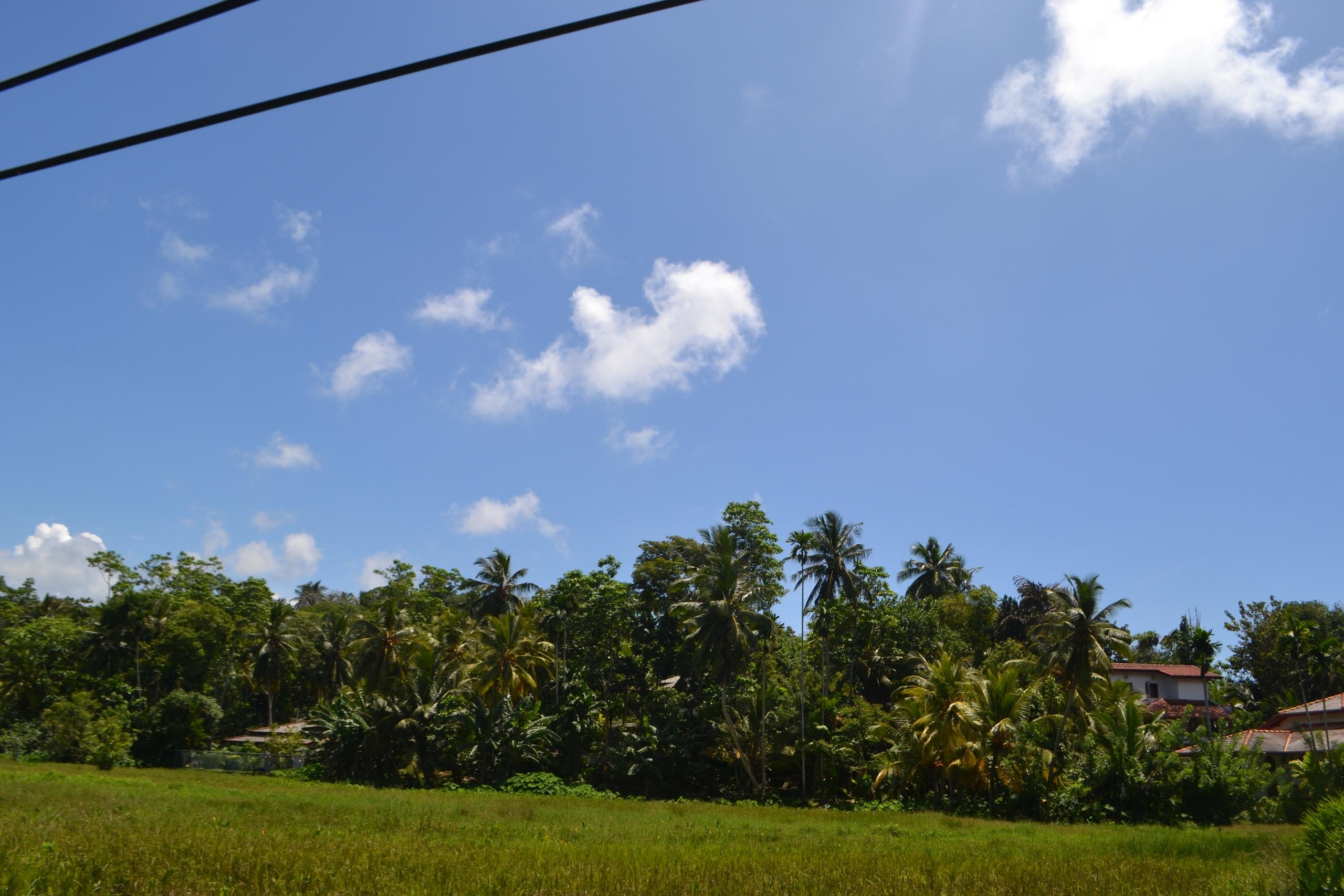 Шри Ланка (фото) - Страница 2 8yRNpgLcQT0