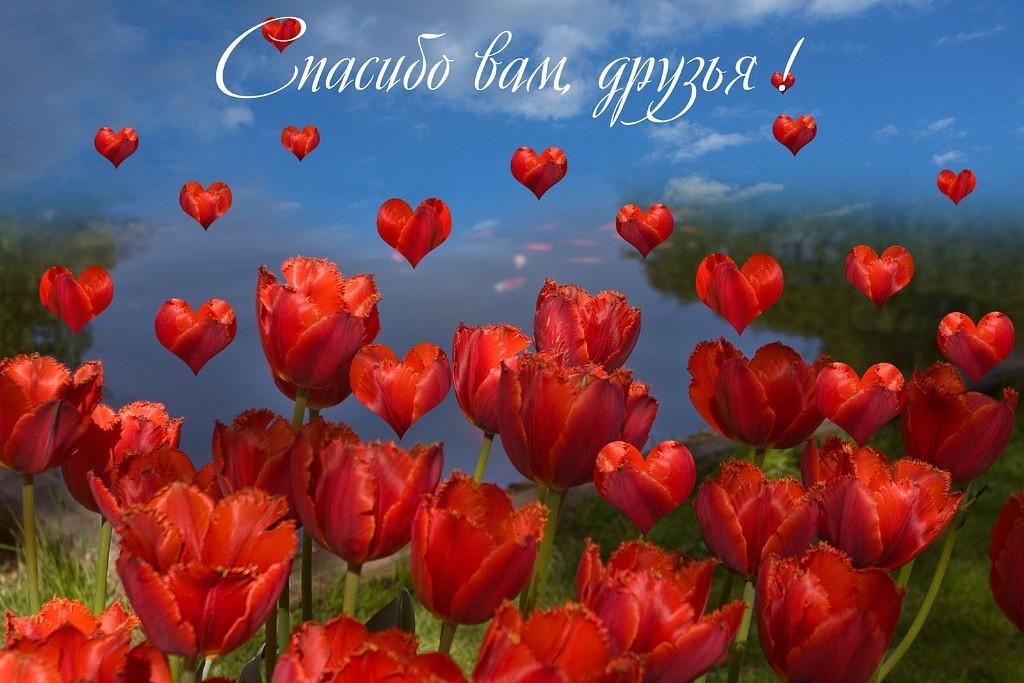 что мои любимые дорогие спасибо за ваши поздравления получила фотожаба российским