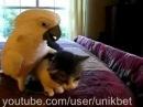 Кот в рабстве у попугая Cat in slavery parrot