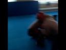 Самбо judo АРБ Я в красном шлеме