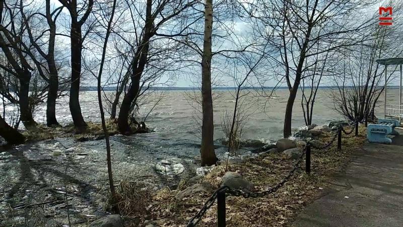 Апрельское пробуждение озера Плещеева.