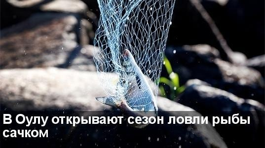 В Оулу открывают сезон ловли рыбы сачком