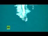 Hier jagt die mexikanische Marine ein Motorboot mit fast zwei Tonnen Kokain an Bord
