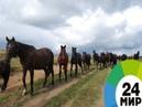 Лошади и человеческие эмоции - МИР 24