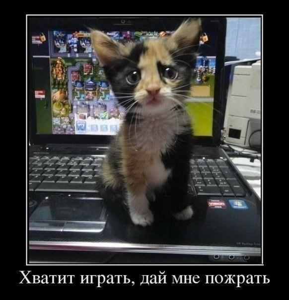 http://cs14113.vk.me/c540100/v540100191/654b/XREGGdA_7RM.jpg
