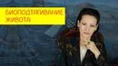 Как убрать растяжки на животе Сеанс Биоподтягивание живота Галина Гроссманн