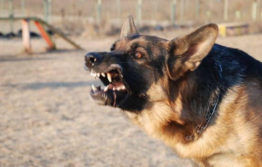 МУ МВД России предупреждает: Если собака настроилась на нападение…