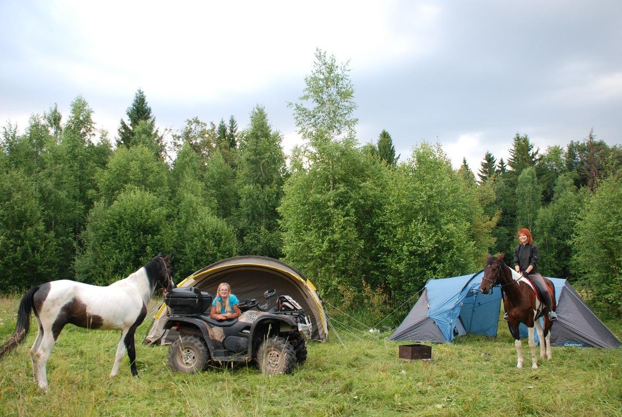 верховая езда конный дворик ашукино