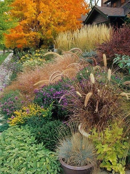 Декоративные травы в садах- ох, как я их люблю!