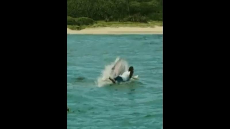 Нападение акулы !