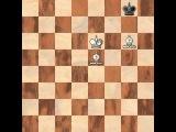 Шахматы для начинающих. Урок 5