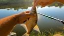 Секретная прикормка для всей рыбы раскрыта Наловил кучу леща на удочку с поплавком