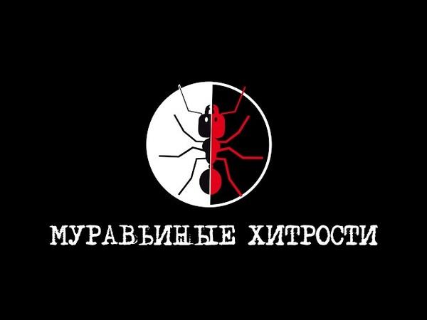 Лучший муравьиный канал всех времен и народов!