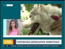 Перевозка домашних животных Утро с Губернией 25 06 2018 GuberniaTV