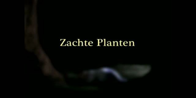 Emma De Swaef Zachte Planten