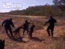 Полиция Папуа-Новой Гвинеи травят собак на предполагаемого наркодилера 18+