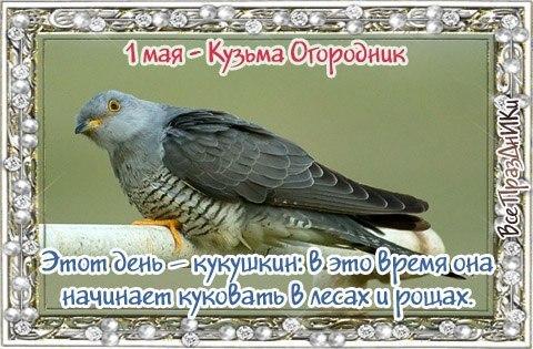 https://pp.userapi.com/c7003/v7003389/2fcd8/NvhZ7bceAqo.jpg