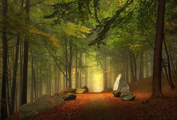 Лесная тропа в Баварии, Германия