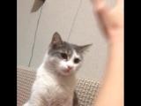 Дразнит кота