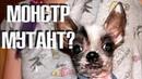НОВЫЙ ПИТОМЕЦ в Зоокоме Реакция Оливы