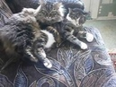 Котенок МАСИК - Смешные коты приколы про котов до слез – Смешные кошки 2019 – Funny Cats