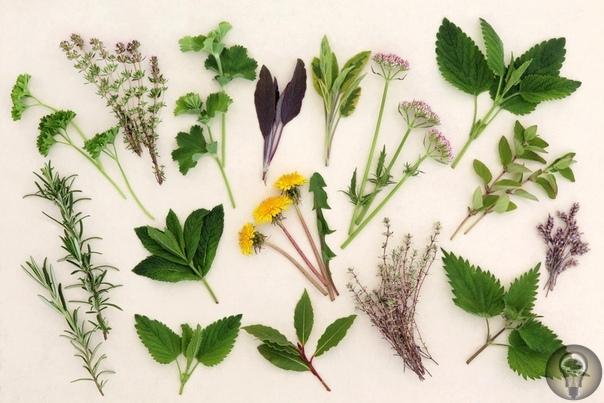 17 самых недооцененных лекарственных растений