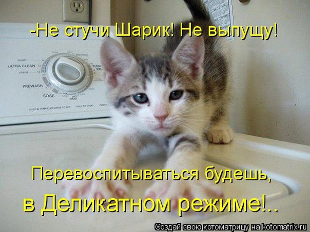 Домашние животные кошки коты котята