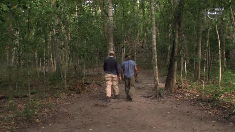 BBC Танны древних цивилизаций 4 серия Тайна городов Майя