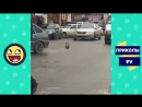 Приколы TV ОСТОРОЖНО ⛔ УБОЙНЫЕ ПРИКОЛЫ 2018 Ржака Жесть Угар