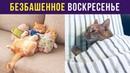 Приколы с котами. Безбашенное воскресенье Мемозг 21