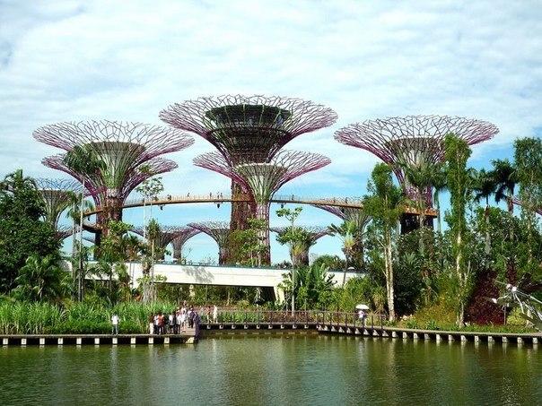 Деревья-гиганты в Сингапуре.