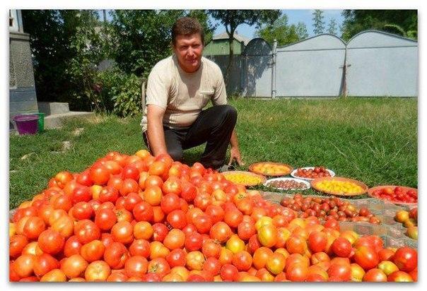 Волшебный бальзам для роста помидоров от садовода-огородника Владимира...