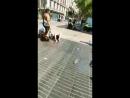 13 Muertos en Atropellamiento Masivo en Rambla de Barcelona